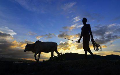 Индия е най-големият износител на говеждо в света