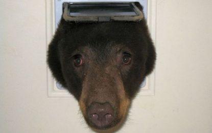 Спипаха мечок, който се мисли за котка