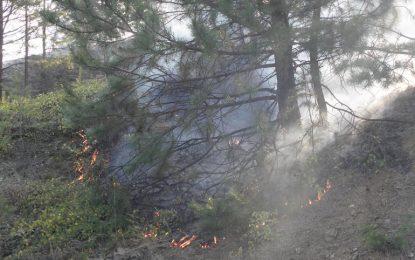 100 декара гора пламна над Златоград