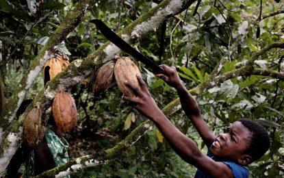 """""""Нестле"""" на съд заради деца роби в какаовите плантации в Африка"""
