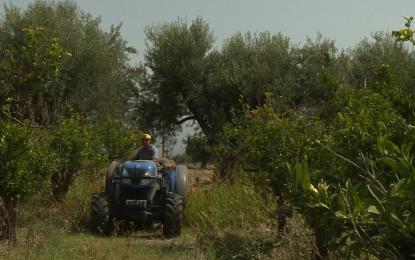Мафията в Италия спечелила €16 млрд. от фермерите
