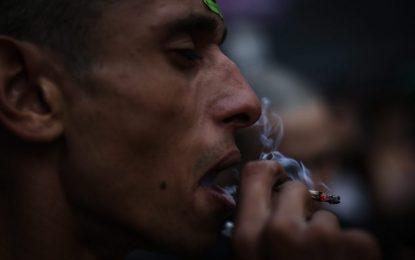 """""""Див звяр"""" ли е марихуаната"""
