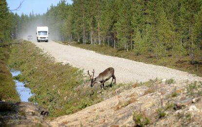 Финландия брани елените на пътя с приложение за смартфон
