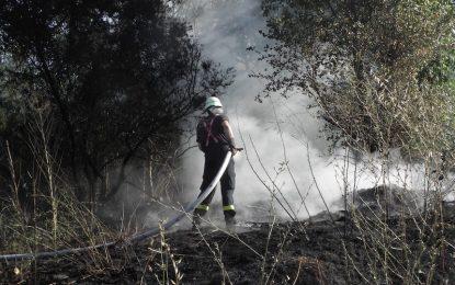 Овладян е пожарът в Бургаско