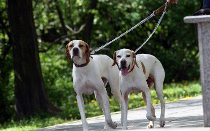 Масово тровят кучета във Враца