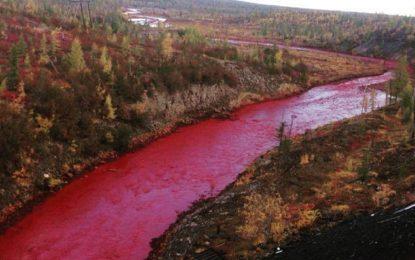 Кървава река шашна жителите на Норилск