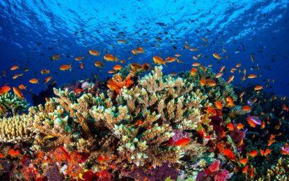 Да пием за Големия бариерен риф