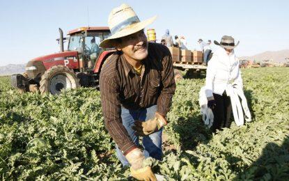 Защо САЩ трябва да дадат амнистия на нелегалните работници
