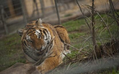 Александър Балкански: Немислимо е да има цирк без животни
