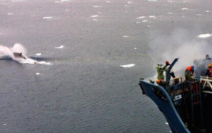 ООН забрани на Япония да лови китове
