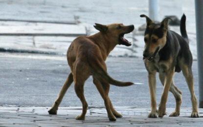 Тровят кучета във Враца