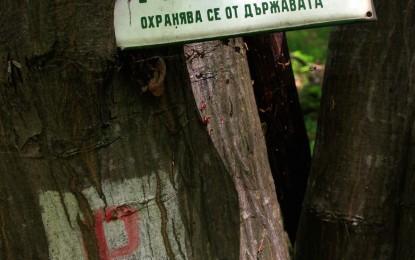 Знаци по пътя