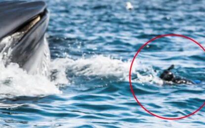 Водолаз оцеля след близка среща с кит и акула