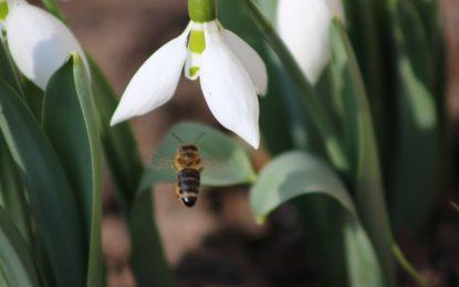 Обама обяви мерки за спасяването на пчелите