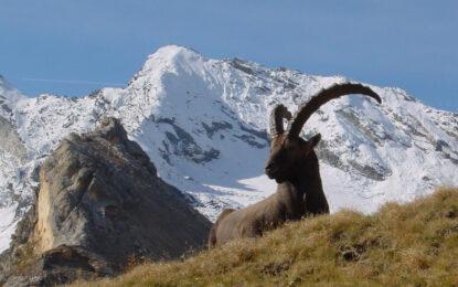 Италианци продават алпийско село за 245 000 евро