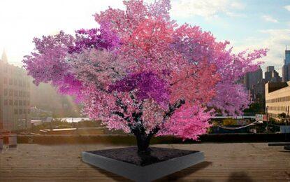 Дървото, което дава 40 вида плодове