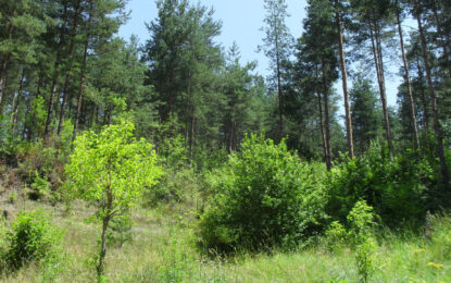 Жандармерия ще охранява горите срещу незаконна сеч