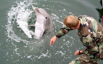 Делфините на Крим – вече назначени в руската армия