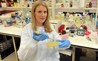 Учени отглеждат кръвоносни съдове за дни