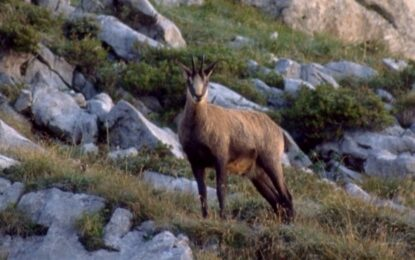 Преброяване на дивите кози за 1.4 милиона