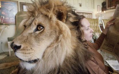 Да спиш с лъвове