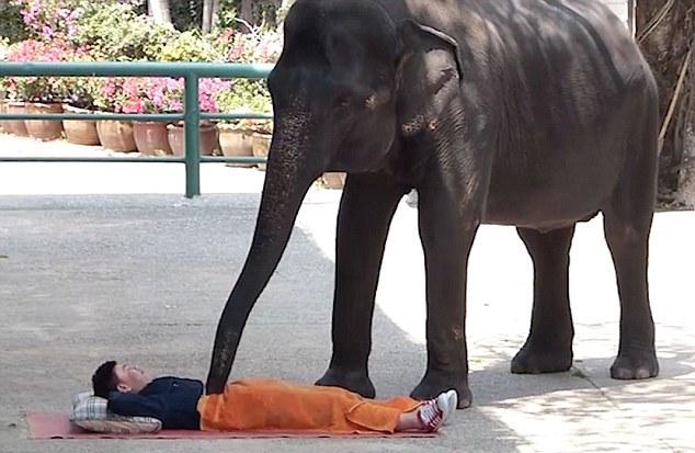 Слон гази срещу стрес