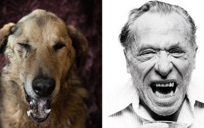 Фотограф преобрази кучета от приют в известни писатели