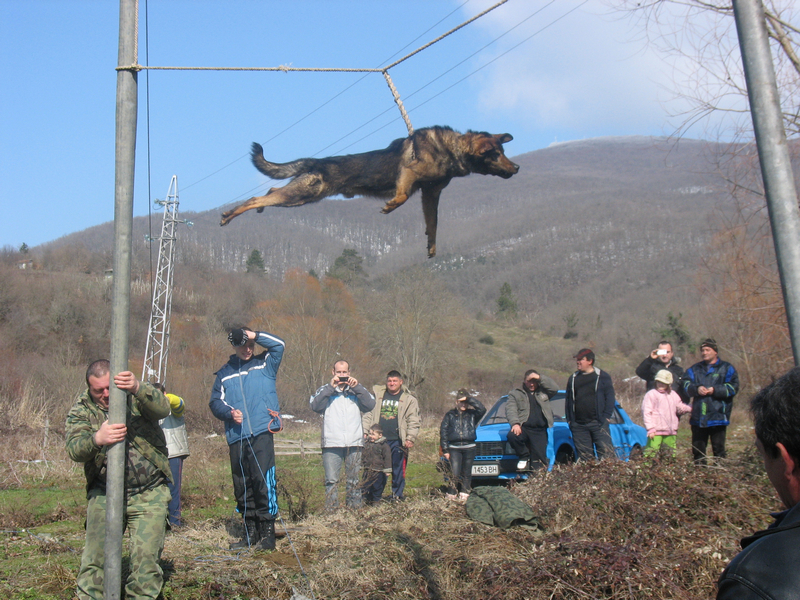 Варварският обичай на село Бродилово за тричане на кучета