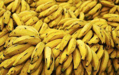 Бананите в Русия удариха 15-годишен връх