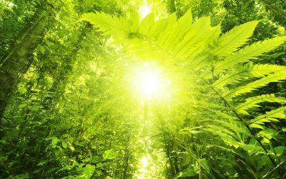 Бионично листо превръща светлината в гориво
