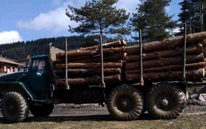 Камери в цеховете за дървесина от 2016, GPS в камионите oт 2017