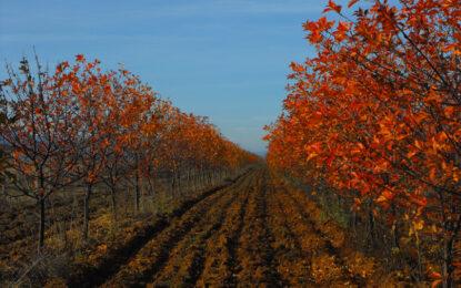 Офшорки ще могат да притежават земя в България