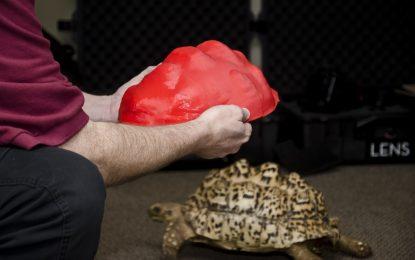 3D черупка предпазва костенурка от бактерии и инфекции