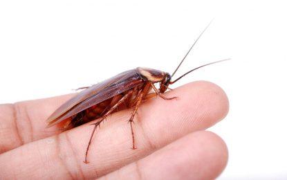 Хлебарките също плачат
