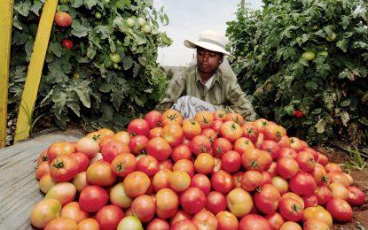 България и още 14 в Европа не пускат ГМО
