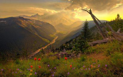 "70 претенденти за ""оскарите"" за защита на природата"