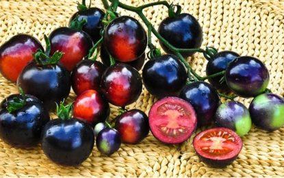 Ананаси против рак и домати за сърце ще се продават в САЩ