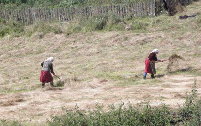 Кабинетът одобри договорите за ден в земеделието