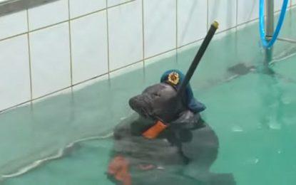 Сибир отбеляза Деня на победата с шоу на бойни тюлени