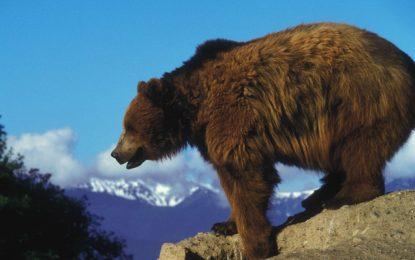 България се рекламира като място за лов на мечки гризли и сьомга