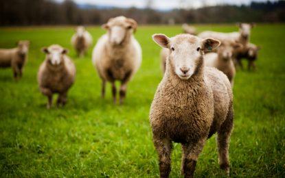 Декларираш пасище – купуваш животни