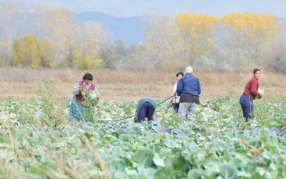 Сезонните работници – с трудов договор