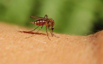 """Промените в климата водят до бум на вирусите като """"Зика"""""""