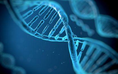 Учени откриха как да поправят ДНК в мозъка, сърцето, очите и черния дроб