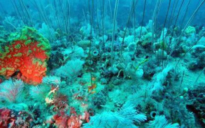 Ново морско царство съперничи на Големия бариерен риф