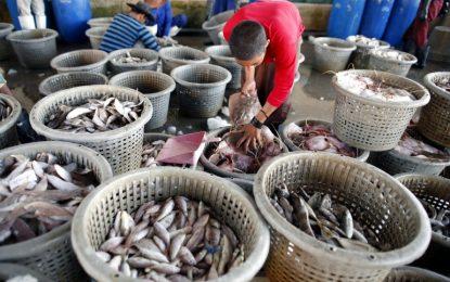 Животът в морето намалял наполовина за 40 години
