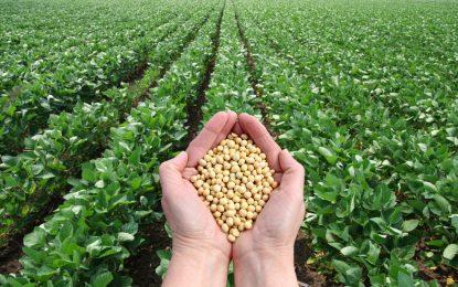 ГМО соя от Украйна е плъзнала на българския пазар