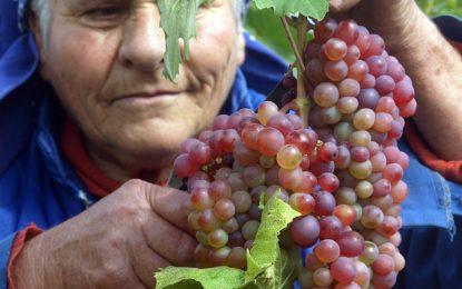 Винарите ни отрязани от европари, ще се жалват в Брюксел