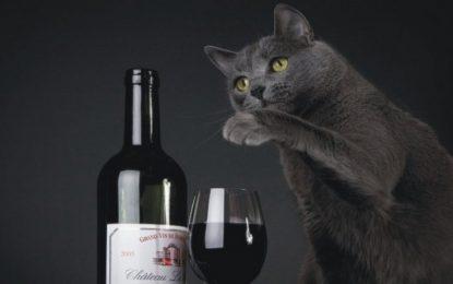 Котарак беглец изпи три бутилки вино