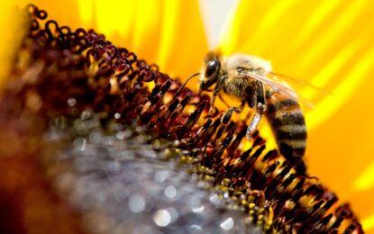 Хората отглеждат пчели от близо 9000 години